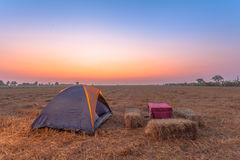 Camping in rice fields Stock Image