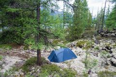Camping site with a blue tent on moss field in the fir forest Stock Photo