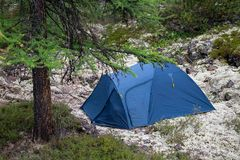Camping site with a blue tent on moss field in the fir forest, closeup Stock Photos