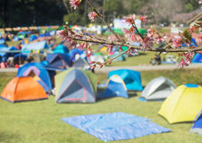 Camping sites with tents Stock Photos