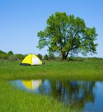 Green tourism in the summer. The yellow tent and the big oak is reflected in water of small lake stock photography