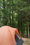Camping Tent Against Woods. Orange tent pitched on sandy campsite in lower left of frame with tall green trees filing the frame. Vertical format Stock Photos
