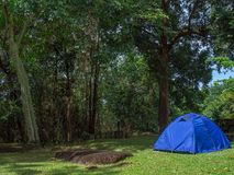 Camping tent. Camping blue tent on green grass under the tree in the forest royalty free stock photography