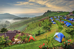 Camping tent. At dawn on the mountain, Chiangmai Thailand Royalty Free Stock Photography