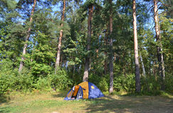 Camping tent in forest Stock Image