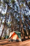 Camping Tent Stock Photo