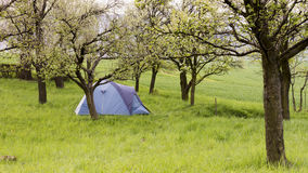 Camping tent in garden Royalty Free Stock Photography