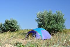 Camping tent in grass. Camping tent colored in blue and purple standing on sand seashore between high drought tolerant grass. Clear sky and two Oleaceae Europea royalty free stock photo