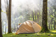 Camping tent in green forest Royalty Free Stock Images