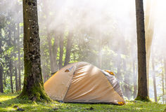 Camping tent in green forest in spring sunny morning with fog ha Royalty Free Stock Photo