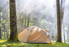 Camping tent in green forest in spring sunny morning with fog ha Royalty Free Stock Image