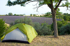 Camping tent by lavender fields, Provence, France. Stock Images