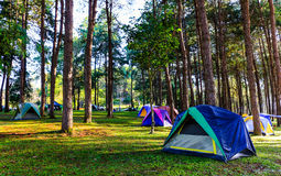 Camping tent. In national park Royalty Free Stock Image