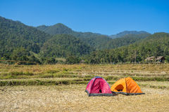 Camping tent in the rice field Royalty Free Stock Photos