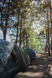 Camping tent in the top of mountain in the morning. Adventures Camping and tent under the pine forest,Camping tent in the top of mountain in the morning Royalty Free Stock Photo