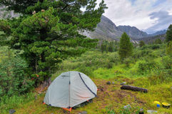 Camping tent under Siberian Pine Stock Photography