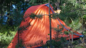 Camping tent in the wood on a glade Stock Photography