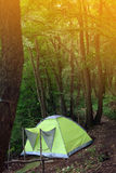 Camping tent. In the woods Royalty Free Stock Photography