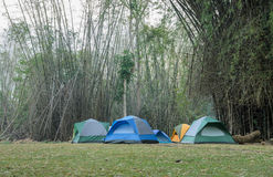 Camping tents in bamboo forest Royalty Free Stock Photo