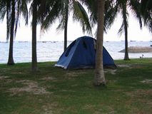 Camping tents among coconut trees. At East Coast beach in Singapore at dusk Stock Photo