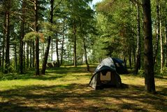 Camping tents in the forest. Three tents in forest camping in summer Stock Images