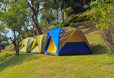 Camping tents in the forest Royalty Free Stock Photo