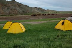 Camping tents in mongolian grassland stock photos