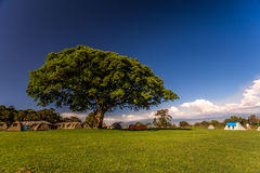 Camping under big tree,Africa Royalty Free Stock Photography