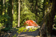 Camping in the woods Royalty Free Stock Photo