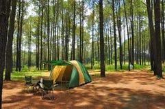 campingowa lasowa sosna Zdjęcie Stock