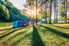 Campingowi namioty pod sosnami z światłem słonecznym przy ssanie w żołądku Ung jeziorem, Mae Hong syn w TAJLANDIA Zdjęcie Stock