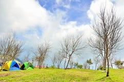 Campingowi namioty z suchym gałęziastym drzewem Obraz Stock