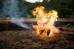 Campingowy ogień na ziemi obraz stock