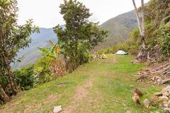 Campingowych namiotów gór dżungli łąkowy widok, El Choro wędrówka, Boliwia Obraz Stock