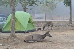 Campingplats för Lamta-khong i Thailand Arkivfoto