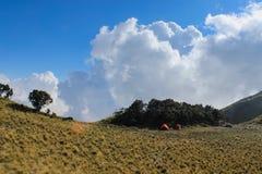 Campingplats- och edelweisträd Royaltyfri Fotografi