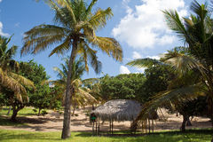 Campingplats under palmträd i Mocambique, East Africa royaltyfri fotografi