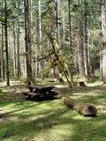 campingplatsskog Royaltyfri Bild