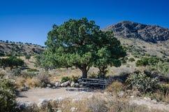 Campingplatz - Guadalupe Mountain National Park Stockfotografie