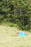 Campingplatz und Wald Stockbilder