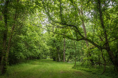 Campingplatz und Wanderung Stockfotos