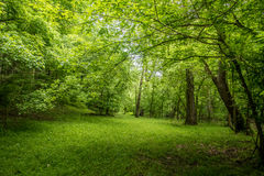 Campingplatz und Wanderung Lizenzfreies Stockfoto
