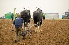 Campionato d'aratura trainato da cavalli Fotografia Stock Libera da Diritti