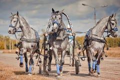 Campionato della troica del Russo della Russia Fotografie Stock