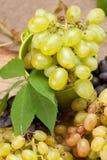 Campionatura del vino Fotografia Stock Libera da Diritti