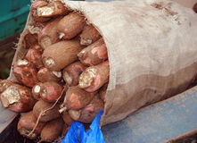 Campione alimentare Fotografie Stock Libere da Diritti