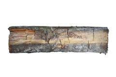 Campione di legno attaccato tramite la putrefazione a secco immagini stock libere da diritti