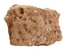 Campione naturale della roccia dell'arenaria con i fossili delle coperture su fondo bianco Immagini Stock