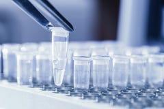 Campioni del DNA di caricamento per la PCR Fotografia Stock