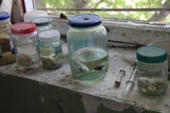 Campioni del pesce alla zona di Chornobyl Fotografia Stock